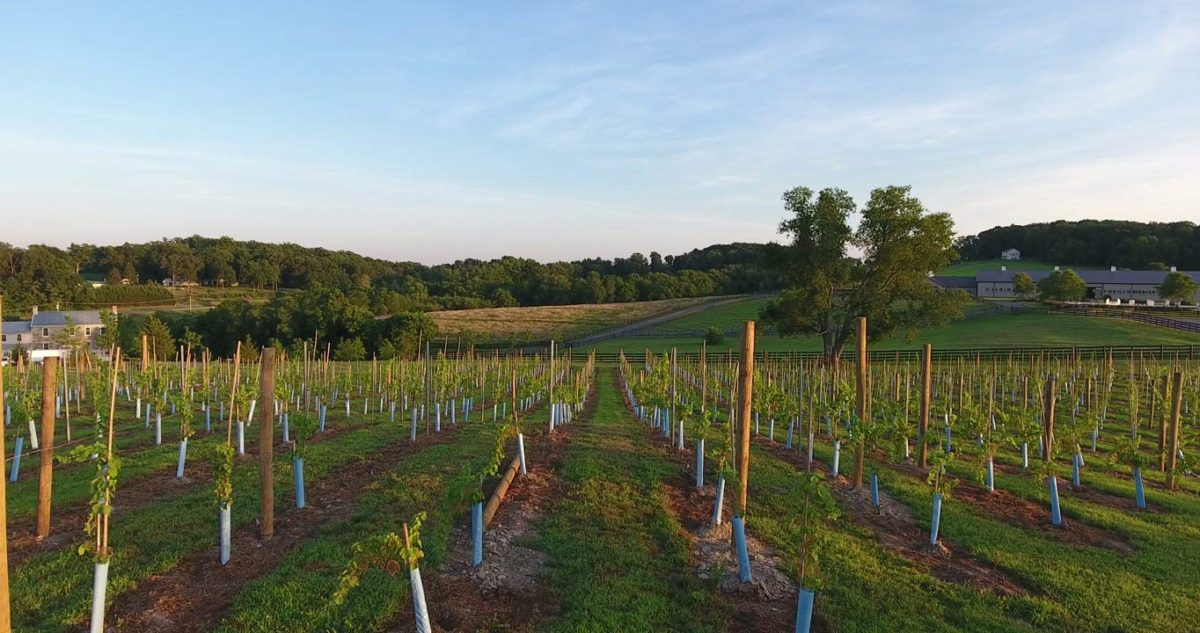 maryland wine vineyard
